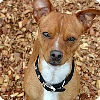 Adopt A Pet :: Spike - Knoxville, TN