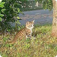 Adopt A Pet :: Max - Maxwelton, WV