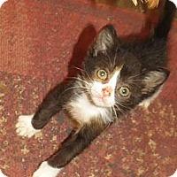 Adopt A Pet :: Bernadette - Edmond, OK