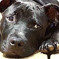 Adopt A Pet :: Truman - Charlotte, NC