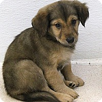 Adopt A Pet :: Breeze - North Olmsted, OH