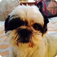 Adopt A Pet :: Charlie - LEXINGTON, KY