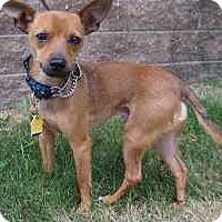 Adopt A Pet :: Murphy - Malaga, NJ
