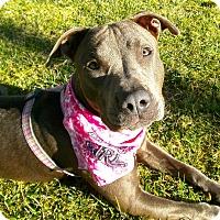 Adopt A Pet :: Skylar - El Cajon, CA