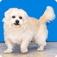 Adopt A Pet :: Fozzie - Livonia, MI