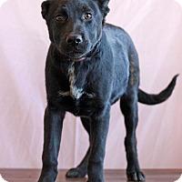 Adopt A Pet :: Shanea - Waldorf, MD