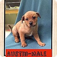 Adopt A Pet :: Austin - Hagerstown, MD