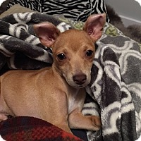Adopt A Pet :: Blaze - San Francisco, CA