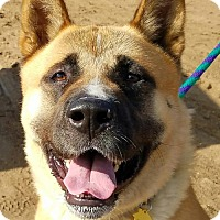 Adopt A Pet :: Copperfield - Bonsall, CA