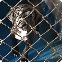 Adopt A Pet :: Deare - Waycross, GA