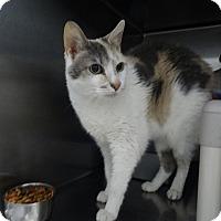 Adopt A Pet :: Snopes - Elyria, OH