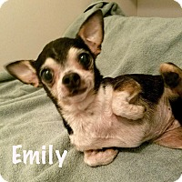 Adopt A Pet :: Emily - Durham, NC