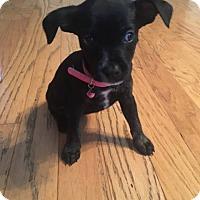 Adopt A Pet :: Razor - Summerville, SC