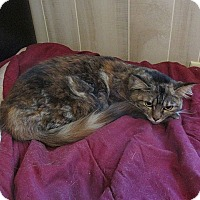 Adopt A Pet :: Emma - Tampa, FL