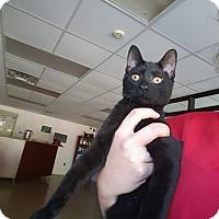 Adopt A Pet :: Ocean - Gadsden, AL