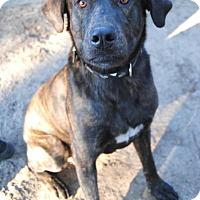 Adopt A Pet :: Captain - Berkeley Heights, NJ