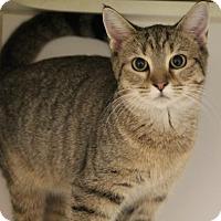 Adopt A Pet :: Victoria - Greensboro, NC