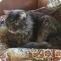 Adopt A Pet :: Puffy - Novato, CA