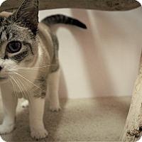Adopt A Pet :: Koa - Seattle, WA