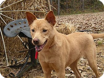 Pet6005963 additionally 8008498 Franklin West Virginia Rat Terrier Mix furthermore 7496710 Virginia Beach Virginia Cat further Abyssinian Cat Breeders In Ontario besides 9914043 Chesterfield Virginia Carolina Dog Mix. on exotic shorthair rescue virginia