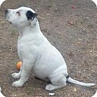 Adopt A Pet :: STARLA - Santa Monica, CA