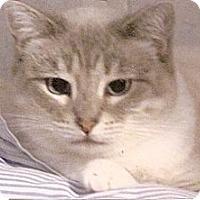 Adopt A Pet :: Josie - Davis, CA