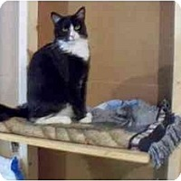 Adopt A Pet :: Wills - Odenton, MD