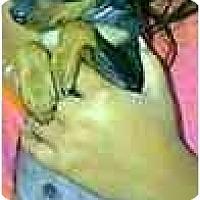 Adopt A Pet :: Marco - dewey, AZ