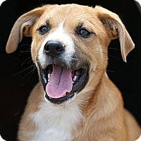 Adopt A Pet :: Rocky - Providence, RI