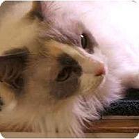 Adopt A Pet :: Sadie - Keizer, OR