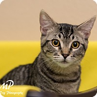 Adopt A Pet :: Weldon - Fountain Hills, AZ
