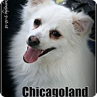Adopt A Pet :: Zero - Elmhurst, IL