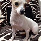 Adopt A Pet :: Nancy 4.5 lbs.