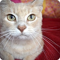 Adopt A Pet :: Erica & Mikey - Xenia, OH