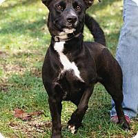 Adopt A Pet :: Princess - Marion, NC