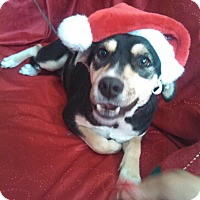 Adopt A Pet :: Jada - San Diego, CA