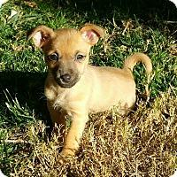 Adopt A Pet :: Bayli - Las Vegas, NV