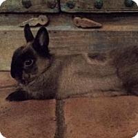 Adopt A Pet :: Legolas - Los Angeles, CA