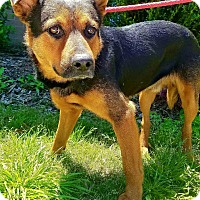 Adopt A Pet :: Denny - Macon, GA