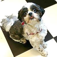Adopt A Pet :: PUMPKIN-pending - Eden Prairie, MN