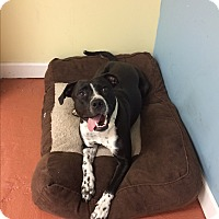 Adopt A Pet :: Ellie - levittown, NY