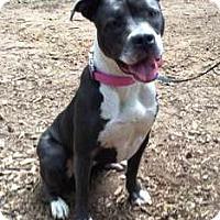Adopt A Pet :: Brook - Cardio Companion! - Decatur, GA