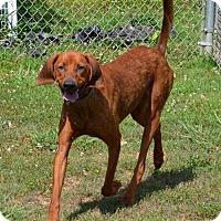 Adopt A Pet :: Dewey - PORTLAND, ME