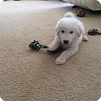 Adopt A Pet :: Bridges - Garland, TX