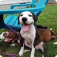 Adopt A Pet :: Emery - Dayton, OH