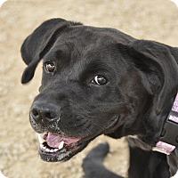 Adopt A Pet :: Cleopatra - Meridian, ID