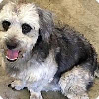 Adopt A Pet :: 'KAFE' - Agoura Hills, CA