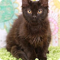 Adopt A Pet :: Hilton - Sterling Heights, MI