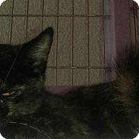 Adopt A Pet :: Jessie - Whittier, CA