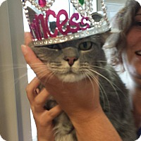 Adopt A Pet :: Elena - Hendersonville, NC